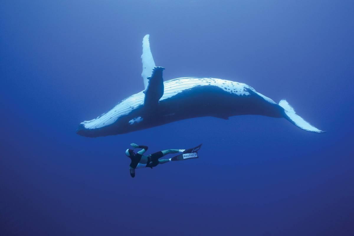 En los genes de la ballena