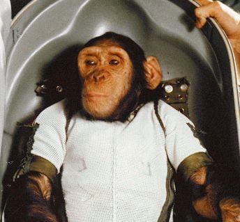 647px-Chimpanzee_Ham_in_Biopack_Couch_-_cropped