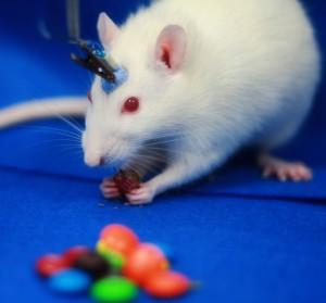 Optogenetic_Laser_Rat4