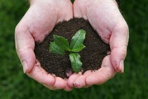 Jonathan Jones, Head Gardener of the Tregothnan Estate, handles some tea leaves from the tea plant C..