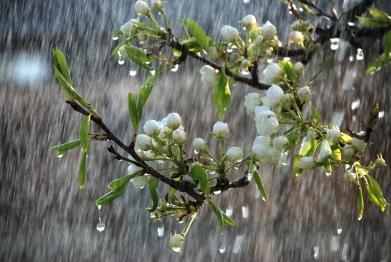 treebranch_rain