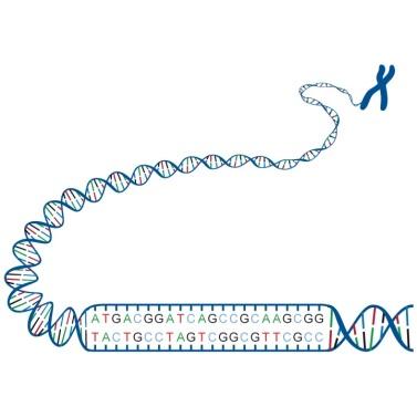 ADN (4)