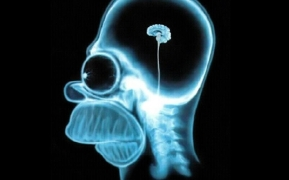 cerebro homer_simpson_brain_the_simpso_2560x1600_wallpapername.com