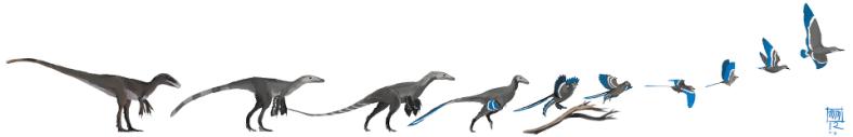 evolución aves