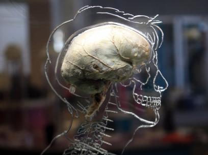 109912538-brain-human